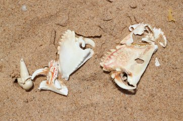 manapad_seashells
